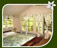 Jungle Lodges and Resorts